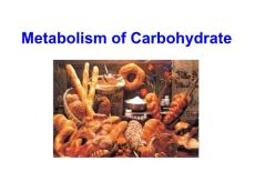 王�R�r生№物化�W(下)�n件0002 Metabolism of carbohydrate