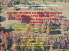 Mountain Pine Beetle and White Pine Blister Rust in ...